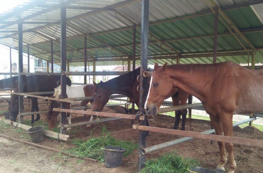 Berwisata Olahraga Sunah Nabi di Princhsto, Pringsewu: Berkuda dan Memanah
