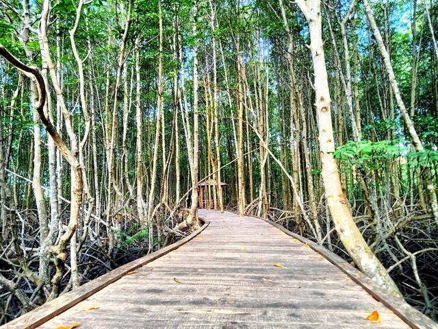 5 Hal yang Bisa Dinikmati di Ekowisata Mangrove Petengoran Pesawaran, Lampung